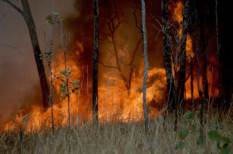 Foto: CSIRO / Wikimedia Commons